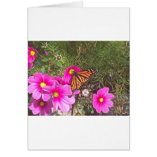 Monarch on Bright Pink Flower Greeting Card
