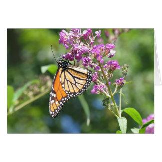 Monarch on Buddleia Card