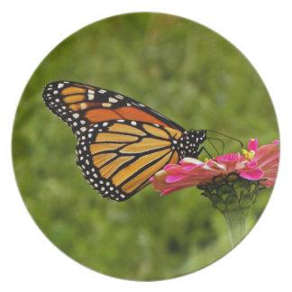 Monarch on Flower Plate