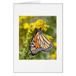 Monarch on Goldenrod - Blank Greeting Card