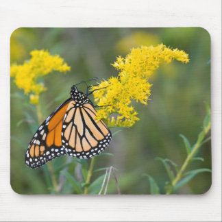 Monarch on Goldenrod Mouse Pad