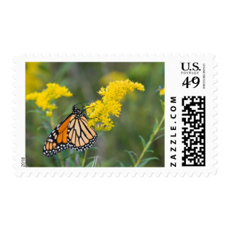 Monarch on Goldenrod Stamp