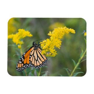 Monarch on Goldenrod Rectangular Photo Magnet