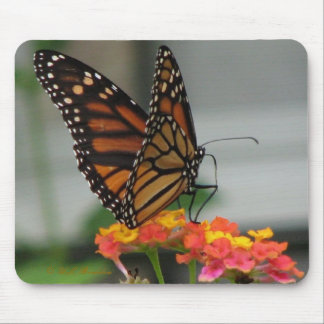Monarch on Lantana Mousepad