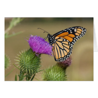 Monarch on pasture Thistle Prairie Ridge Card
