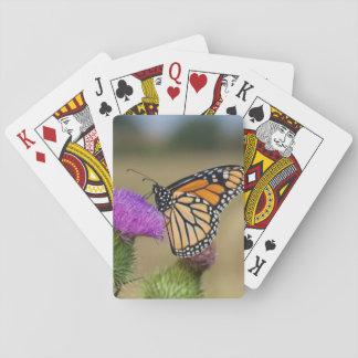 Monarch on pasture Thistle Prairie Ridge Deck Of Cards