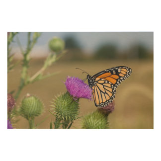 Monarch on pasture Thistle Prairie Ridge Wood Wall Art