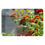 Monarch on Red Butterfly Bush Nature Photography Rectangular Photo Magnet