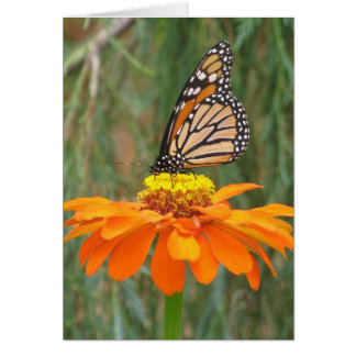 Monarch on Zinnia Card