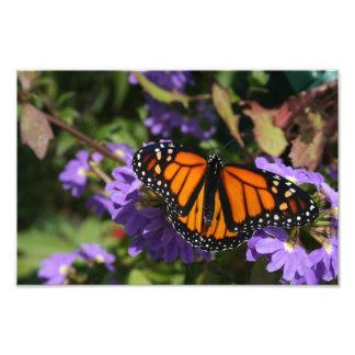 Monarch Photo Print