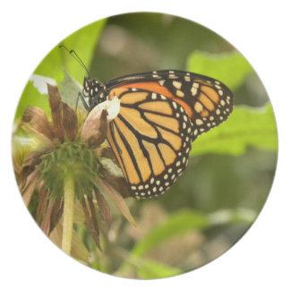 Monarch Plate