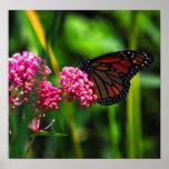 Monarch Print