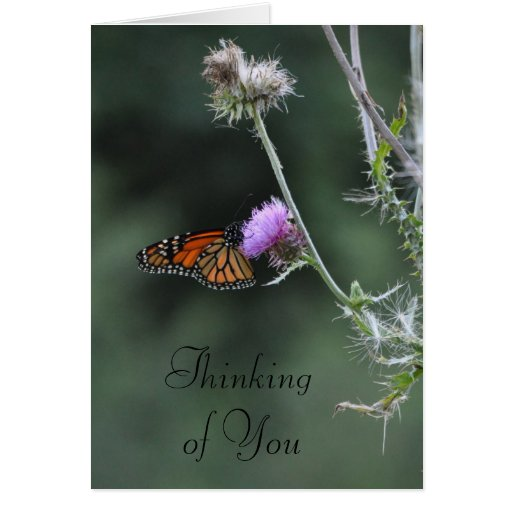 Monarch Thinking of You Greeting Card