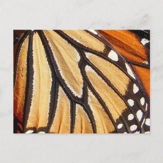 Monarch Wing ~ postcard postcard