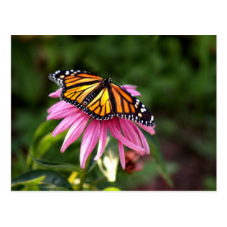 monarch with wings spread postcard