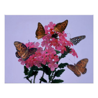 Monarchs and Pink Penta Poster