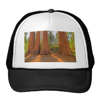 Monarchs of the Forest Trucker Hat