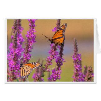 Monarchs On Purple Lustrife Card