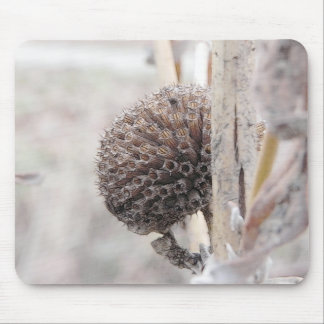 Monarda Seed Head in Early Spring Mouse Pad