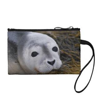 Monedero dulce de la cría de foca