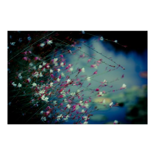 Monet's Dream Photography Poster
