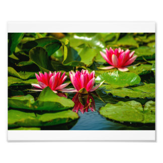 Monet's Water Lilies Photo