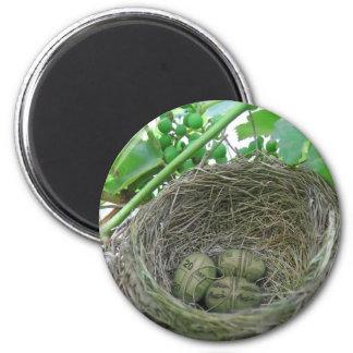 Money Nest Eggs Magnet