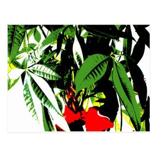Money Plant Postcard