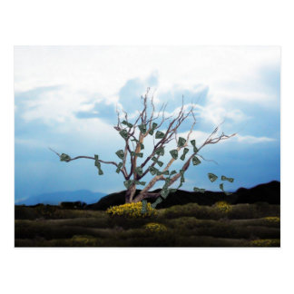 Money Tree on a Windy Day Postcard