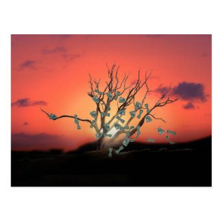 Money Tree Sunset Postcard