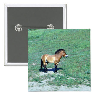 Mongolian (Przewalskii) Wild Horse Pinback Button