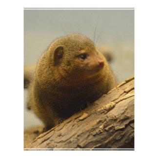 Mongoose a Tree Branch Letterhead