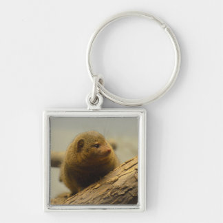 Mongoose a Tree Branch Silver-Colored Square Keychain