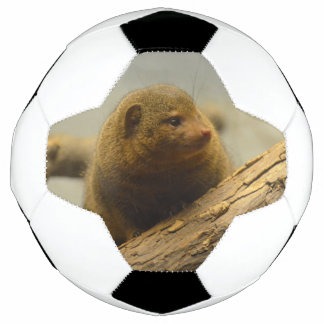 Mongoose a Tree Branch Soccer Ball