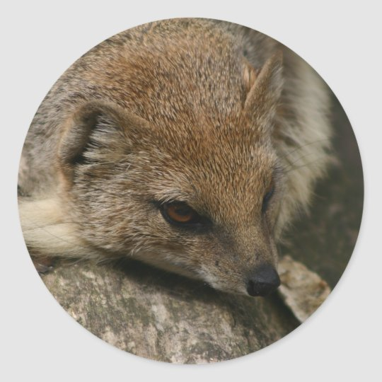 Mongoose Closeup Sticker