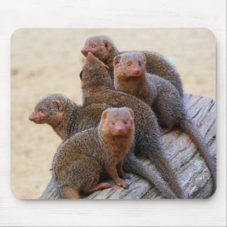 Mongooses Mouse Pads