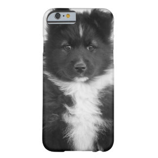 Mongrel Dog, Studio Shot Barely There iPhone 6 Case