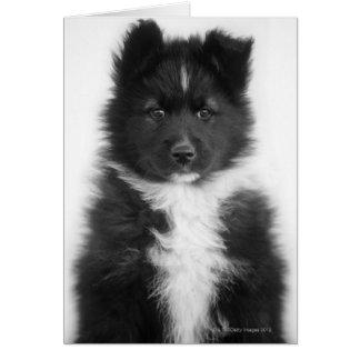 Mongrel Dog, Studio Shot Card