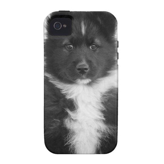 Mongrel Dog, Studio Shot Vibe iPhone 4 Cover
