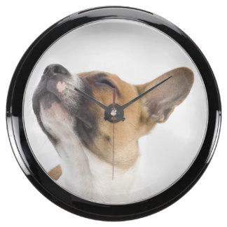 Mongrel puppy aqua clocks