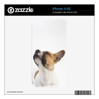 Mongrel puppy decal for the iPhone 4S