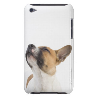 Mongrel puppy iPod touch covers