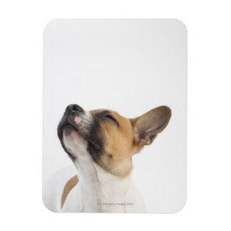 Mongrel puppy magnet