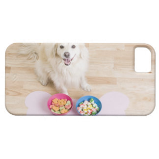 mongrel sitting in front of two bowls with dog iPhone 5 cover