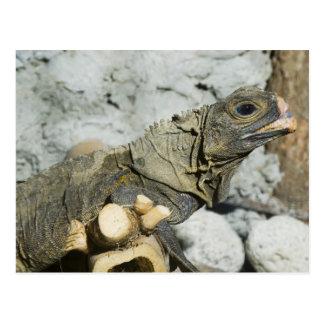 Monitor Lizard Postcard