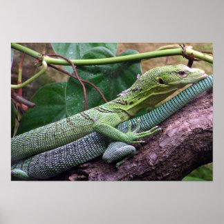 Monitor verde del árbol - prasinus del Varanus Impresiones