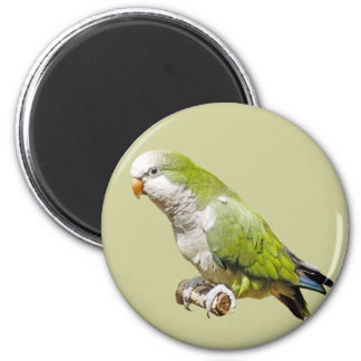 Monk Parakeet 2 Inch Round Magnet