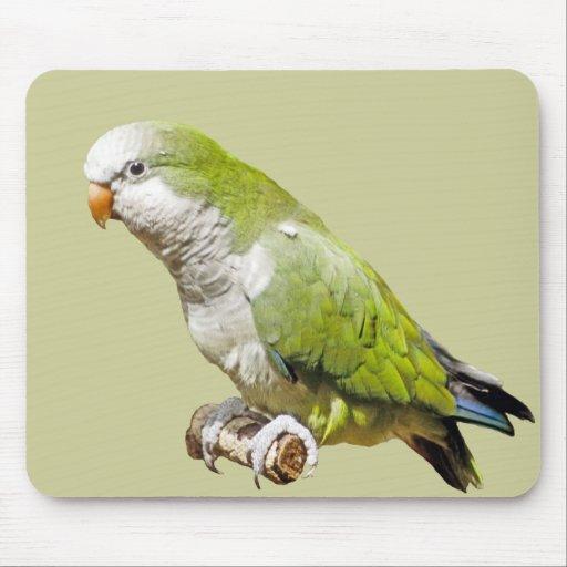 Monk Parakeet Mouse Pad