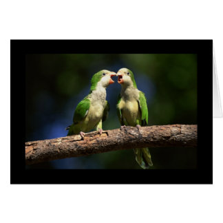 Monk Parakeets Card