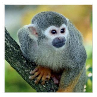 Monkey 004 poster